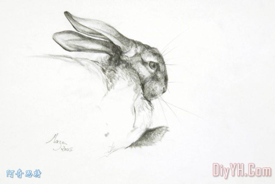 研究的兔子装饰画 风景 动物 素描 绘图 头部 宠物 研究的兔子油画定制