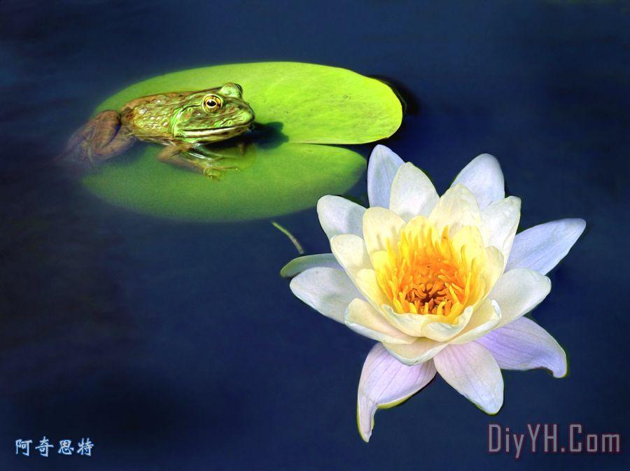 青蛙和睡莲装饰画 花卉 池塘 荷花 青蛙和睡莲油画定制 阿奇思特