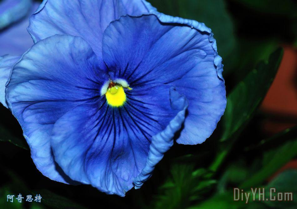 欧式蓝色花油画