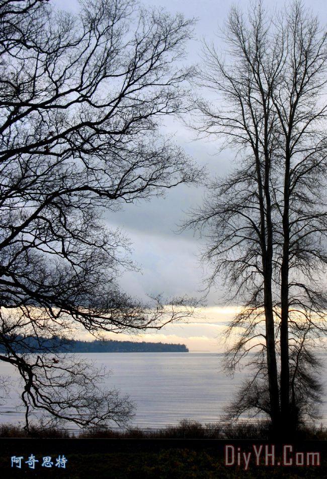 风景 树木 晚霞 海洋 蓝色蕾丝油画定制 阿奇思特
