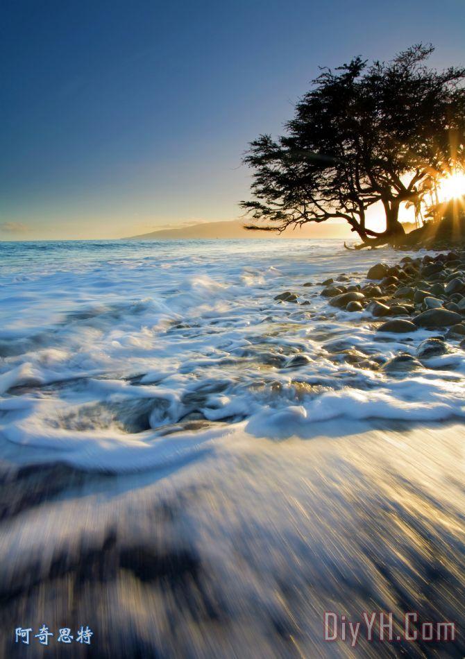 景 海景 树 晚霞 孤独的 卷入海中油画定制 阿奇思特