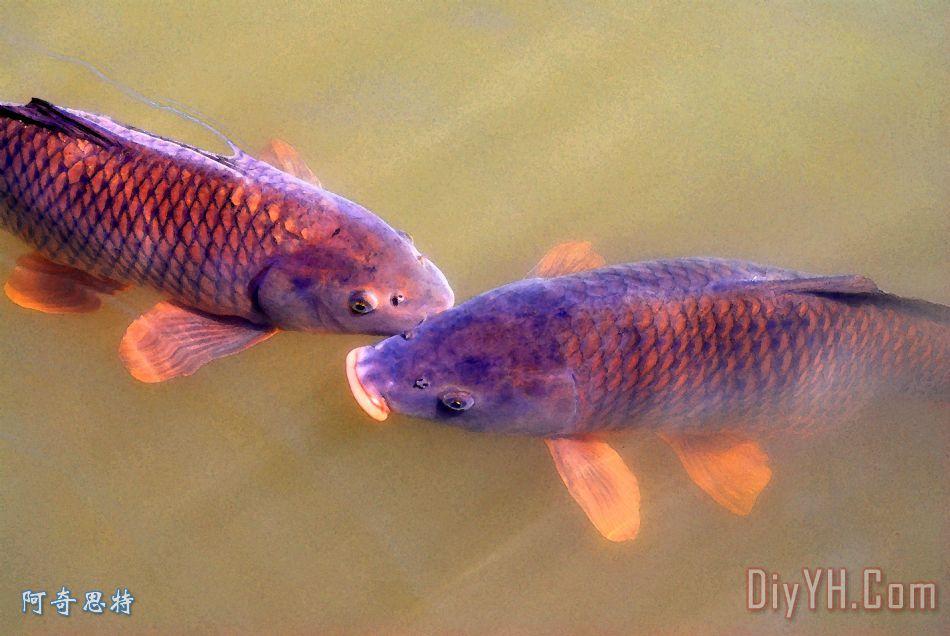 水彩鲤鱼手绘图片展示